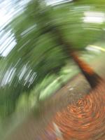 Tree spin